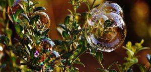 Zeepbubbel op plant